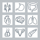 Human internal organs line icons set Stock Photo
