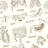Human internals doodle seamless pattern. Vintage illustration Royalty Free Stock Photography
