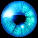 Human iris Stock Image