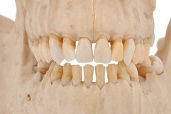 Human jaw Stock Images