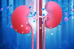 Human kidney with molecule structure royalty free illustration