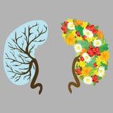 Human kidneys. Human organs with flowers. Medical vector illustration. Health. vector illustration