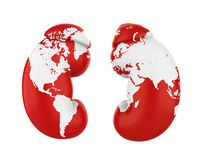 Human Kidneys with World Map. World Kidney Day Concept Stock Images