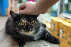 Human kindness, a good hand strokes a stray cat. Human kindness, a kind hand strokes a stray cat oudoors stock photos