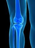 Human knee anatomy. With femur, tibia and fibula bones under X-rays isolated on black Stock Photo