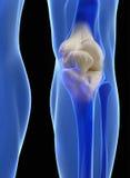 Human knee anatomy. With femur, tibia and fibula bones under X-rays isolated on black Stock Photography