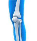 Human Knee Anatomy. Illustration. 3D render stock illustration