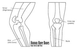 Human knee bones front and side view anatomy. Illustration of Human knee bones front and side view anatomy royalty free illustration