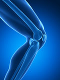 Human knee joint Royalty Free Stock Image
