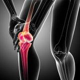 Human knee pain Stock Photography