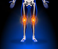 Human knee pain. Skeleton scan Royalty Free Stock Photos