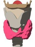 Human larynx. Vector illustration of human larynx anatomy Royalty Free Stock Photography