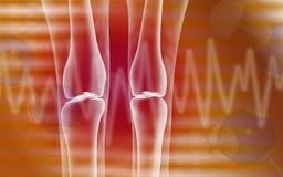 Human leg bone Stock Photos