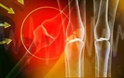 Human leg bone Royalty Free Stock Photography