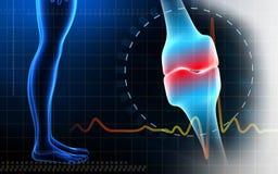 Human leg bone joint and leg Royalty Free Stock Photo