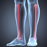 Human Leg Joint Pains (Fibula Joint). 3D Illustration of Human Leg Joint Pains (Fibula Joint Stock Photo