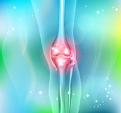 Human leg and knee joint Stock Image