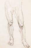 Human legs, anatomy study Royalty Free Stock Photography