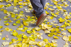 Human legs on the asphalt path with fallen leaves Royalty Free Stock Photos