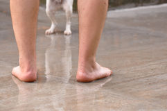 Human legs and  blurry dog legs Royalty Free Stock Photos