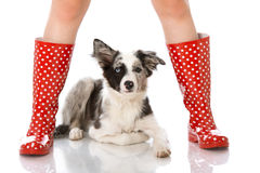 Human legs with dog Royalty Free Stock Photo