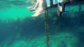 Human legs underwater stock video footage