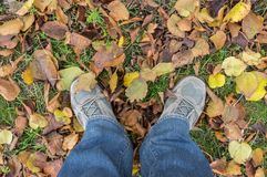 Human legs wearing sneakers and standing on the ground Royalty Free Stock Image