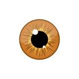 Human light brown eyeball iris pupil isolated on white background. Eye Royalty Free Stock Photos
