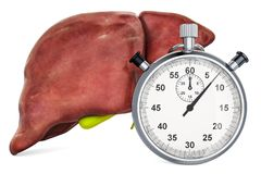 Human liver with stopwatch. First aid and treatment of liver concept, 3D rendering. Isolated on white background stock illustration