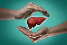 The concept of a healthy liver. royalty free stock photography