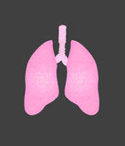Human Lung Anatomy Royalty Free Stock Photo