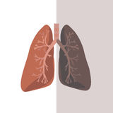Human Lung Anatomy. Vector Stock Photography
