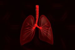 Human lungs. Digital illustration of Human lungs Royalty Free Stock Photos