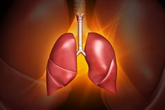Human lungs. Digital illustration of human lungs in colour background Royalty Free Stock Images