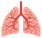 Human lungs Stock Photography