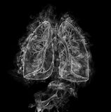 Human lungs and bronchi Stock Photos