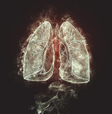 Human lungs and bronchi Stock Photography