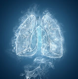 Human lungs and bronchi Royalty Free Stock Photo