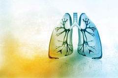 Human lungs. Digital illustration of Human lungs stock illustration