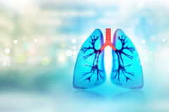 Human lungs Stock Images