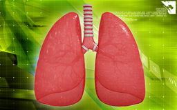 Human lungs Royalty Free Stock Images