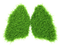 Human lungs in the form of green fresh grass