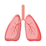 Human lungs icon in cartoon style Royalty Free Stock Images