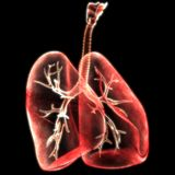 Human Lungs Inside Anatomy Royalty Free Stock Photos