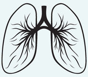 Human lungs. Isolated on blue background Royalty Free Stock Photos
