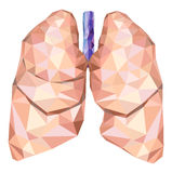 Human lungs in low poly with trachea. Vector Stock Images