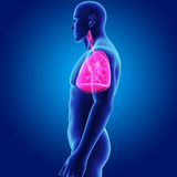 Human Lungs with Body Lateral view royalty free illustration