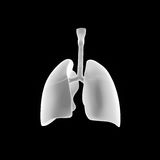 Human Lungs posterior view Stock Images