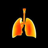 Human Lungs posterior view Royalty Free Stock Photography
