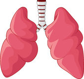 Human Lungs respiratory cartoon Royalty Free Stock Image